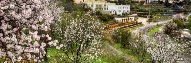 La flor de l'ametlla converteix a Mallorca amb un jardí que floreix